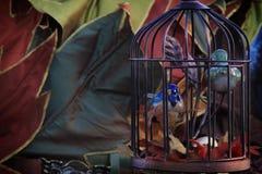 Gabbia per uccelli in autunno Fotografie Stock Libere da Diritti
