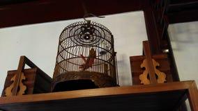 Gabbia per uccelli cinese antica Fotografia Stock Libera da Diritti