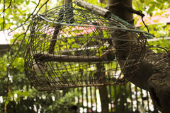 Gabbia per uccelli vuota Immagini Stock