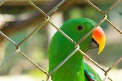 Gabbia verde di behide del pappagallo Fotografia Stock Libera da Diritti