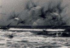 Gabbiani Fotografia Stock Libera da Diritti