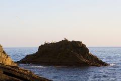Gabbiani al tramonto Immagini Stock Libere da Diritti
