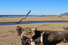 Gabbiani alla baia di Depoe sulla costa dell'Oregon immagini stock