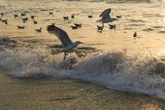 Gabbiani alla spiaggia fotografia stock