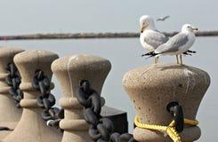 Gabbiani appollaiati su Cleveland Harbor, il lago Erie Fotografie Stock Libere da Diritti