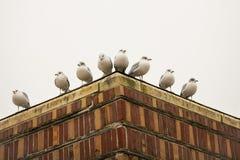 Gabbiani asimmetrici sull'angolo del tetto Immagini Stock Libere da Diritti