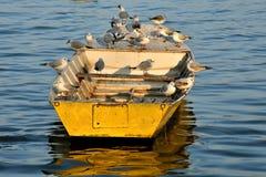 Gabbiani a bordo Immagini Stock Libere da Diritti