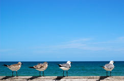 Gabbiani che esaminano oceano Fotografia Stock Libera da Diritti