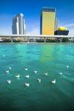 Gabbiani che galleggiano nel fiume di Sumida immagini stock libere da diritti