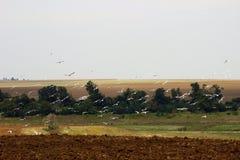 Gabbiani che si librano sopra un campo Fotografia Stock Libera da Diritti