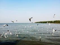 Gabbiani che sorvolano il mare fotografie stock libere da diritti
