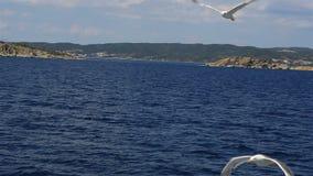 Gabbiani che sorvolano il mare archivi video