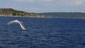 Gabbiani che sorvolano il mare stock footage