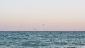 Gabbiani che sorvolano il mare al tramonto stock footage