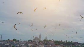 Gabbiani che sorvolano il mare, contro il contesto di Costantinopoli, la Turchia stock footage