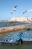 Gabbiani che sorvolano la città di Essaouira nel Marocco Fotografia Stock