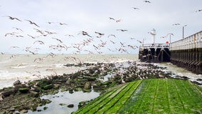 Gabbiani che volano intorno al sentiero costiero Immagine Stock