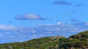 Gabbiani che volano nel cielo Fotografia Stock