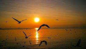 Gabbiani che volano nel tramonto sopra il mare immagini stock libere da diritti