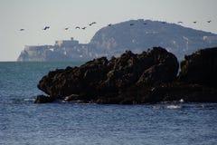 Gabbiani che volano sulla linea costiera di Gaeta Fotografia Stock