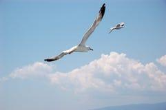 Gabbiani che volano via Immagine Stock