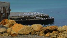 Gabbiani dal mare immagine stock