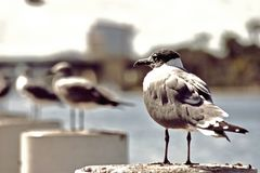 Gabbiani dall'oceano immagine stock libera da diritti