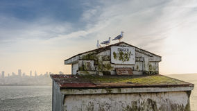 Gabbiani di Alcatraz Fotografie Stock