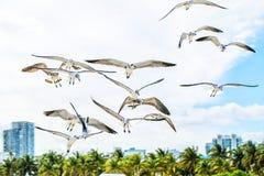 Gabbiani di mar Bianco che volano nel cielo soleggiato blu Immagini Stock Libere da Diritti