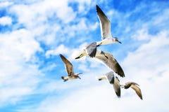 Gabbiani di mar Bianco che volano nel cielo soleggiato blu Immagine Stock