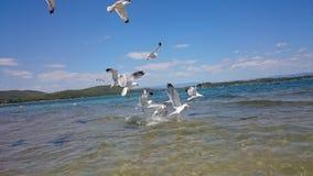 Gabbiani di mare in acqua fotografie stock