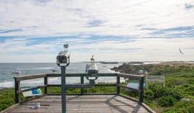 Gabbiani di mare: Allerta dell'isola del pinguino Fotografie Stock