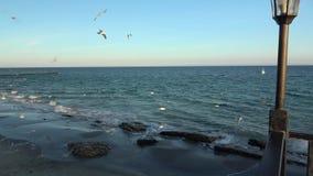 Gabbiani di mare che volano nel cielo soleggiato blu sopra i gabbiani della costa che prendono i pezzi di pane in volo video d archivio