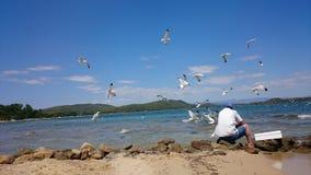 Gabbiani di mare d'alimentazione del pescatore anziano immagine stock libera da diritti