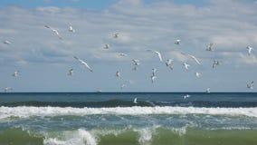 Gabbiani di mare su Myrtle Beach Fotografia Stock