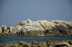 Gabbiani di mare su una grande roccia bianca Immagine Stock