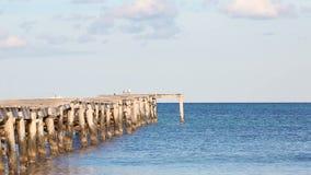 Gabbiani di mare sul molo nella vista sul mare video d archivio