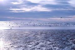 Gabbiani di mare sulla spiaggia di southsea Fotografia Stock Libera da Diritti