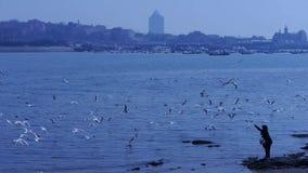 Gabbiani di un'alimentazione della donna alla spiaggia, molta volo del gabbiano nel mare, scogliera, dighe della spiaggia della c stock footage