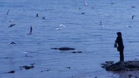 Gabbiani di un'alimentazione della donna alla spiaggia, molta volo del gabbiano nel mare, scogliera, la gente e natura stock footage