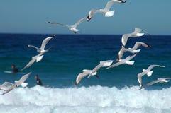 Gabbiani di volo Fotografia Stock Libera da Diritti