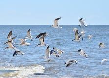 Gabbiani di volo sopra l'acqua Immagini Stock Libere da Diritti