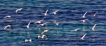 Gabbiani di volo sopra un mare Immagini Stock Libere da Diritti