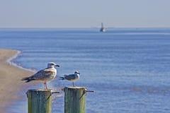 Gabbiani e barca del gambero immagini stock libere da diritti