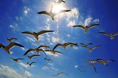Gabbiani e luce solare Fotografia Stock Libera da Diritti