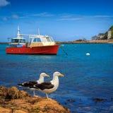 Gabbiani e una barca rossa Immagine Stock