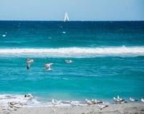 Gabbiani e una sterna sulla spiaggia fotografie stock libere da diritti