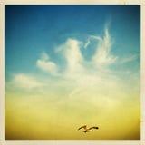Gabbiani nel cielo Fotografia Stock Libera da Diritti