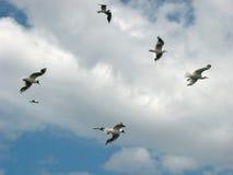 Gabbiani nel cielo Immagini Stock