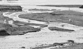 Gabbiani nel fiume vicino al mare Fotografia Stock